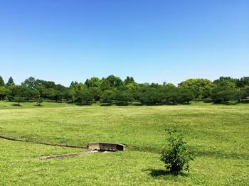 晴天の春日公園
